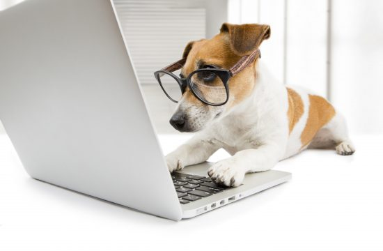 dog website design